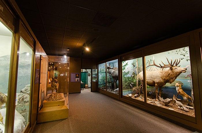 Schiele Museum Gaston County