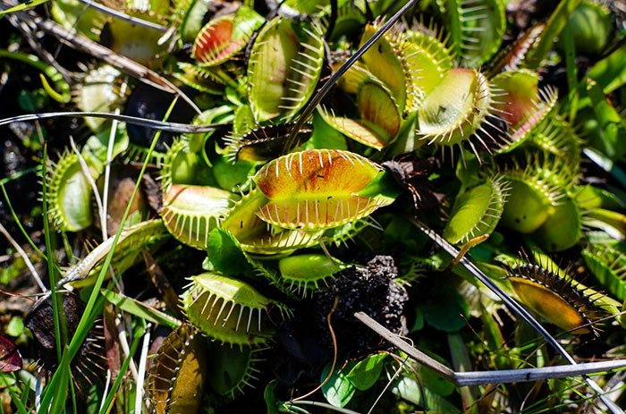 Venus Flytrap things to do in Wilmington