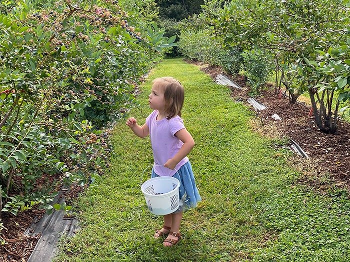 things to do with kids in Durham NC blueberry farms