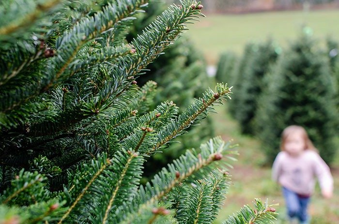 Christmas Tree Farms in NC