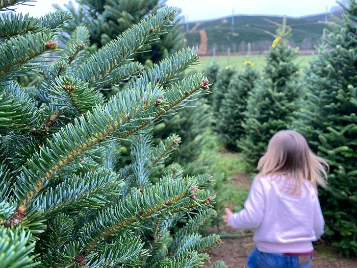 Day Trips from Boone NC Ashe County Christmas Tree Farms