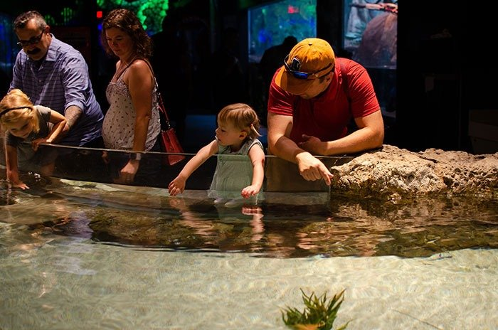 Greensboro Science Center is our favorite of all things to do with kids in Greensboro!