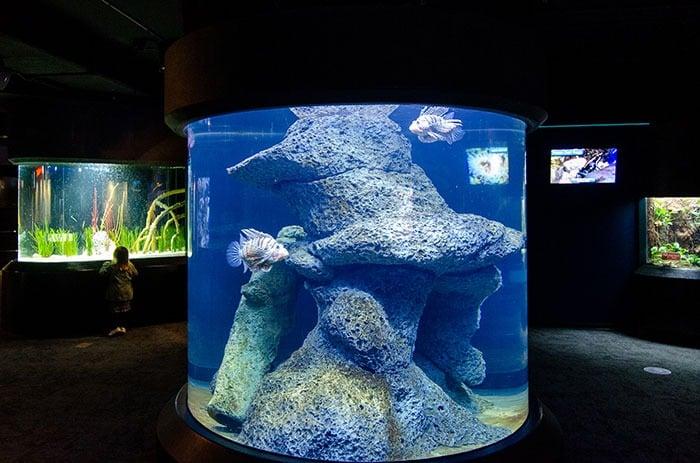 exhibits at North Carolina Aqaurium at Fort Fisher Wilmington