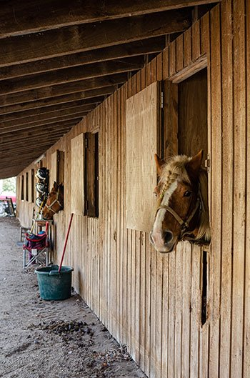 horses at Leatherwood things to do in Wilkesboro NC