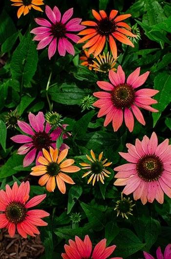 Cape Fear Botanical Garden flowers in NC