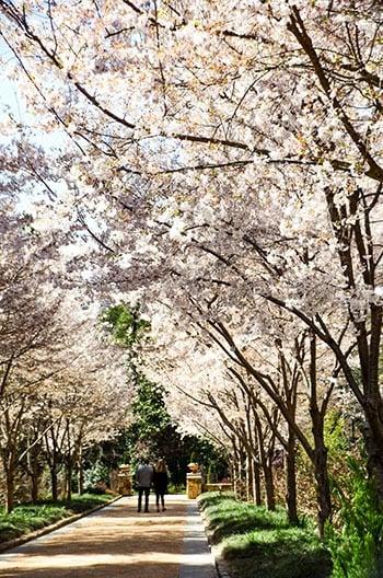 Duke Gardens Spring Botanical Gardens near me