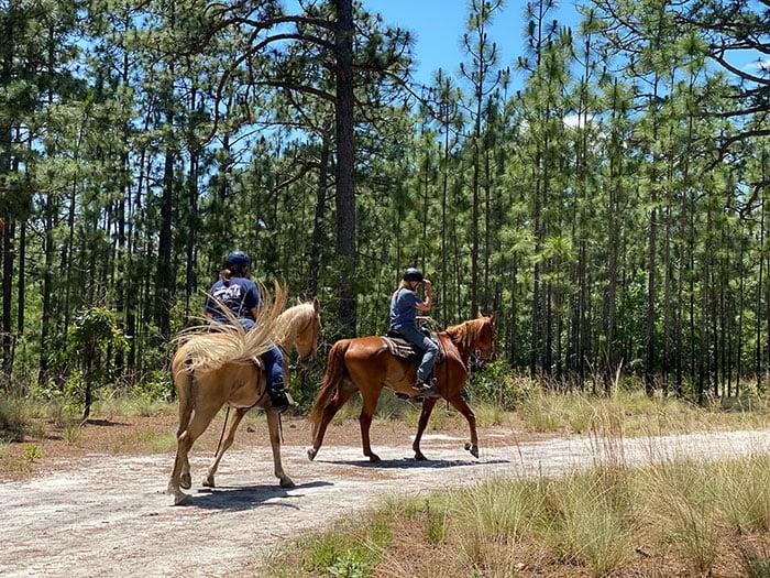 Carvers Creek State Park Horseback Riding