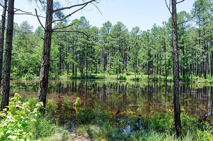 Carvers Creek State Park Little Pond