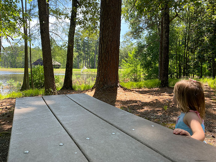 Carvers Creek State Park Picnic Table