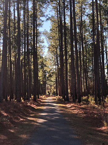 Lake Waccamaw State Park Path near Visitor Center