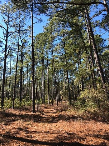 Lake Waccamaw State Park Pine Woods Trail