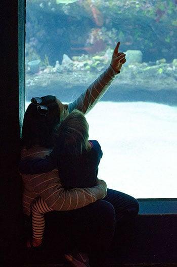 North Carolina Aquarium at Fort Fisher Swim tank