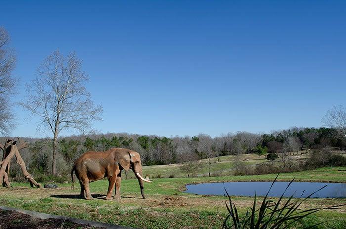 Day Trips from Greensboro NC Zoo Asheboro
