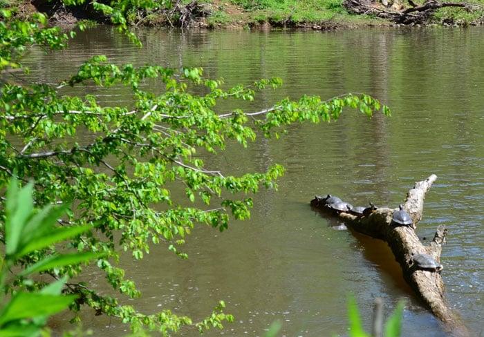 Spring Break Destinations in North Carolina Durham Eno River State Park