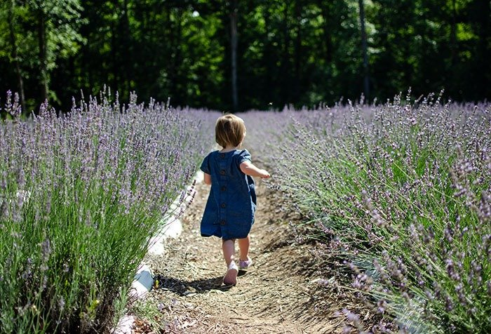 Charlotte at Lavender Farm in NC