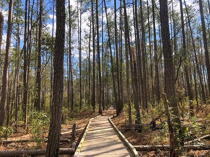 Goose Creek State Park Mallard Creek Trail