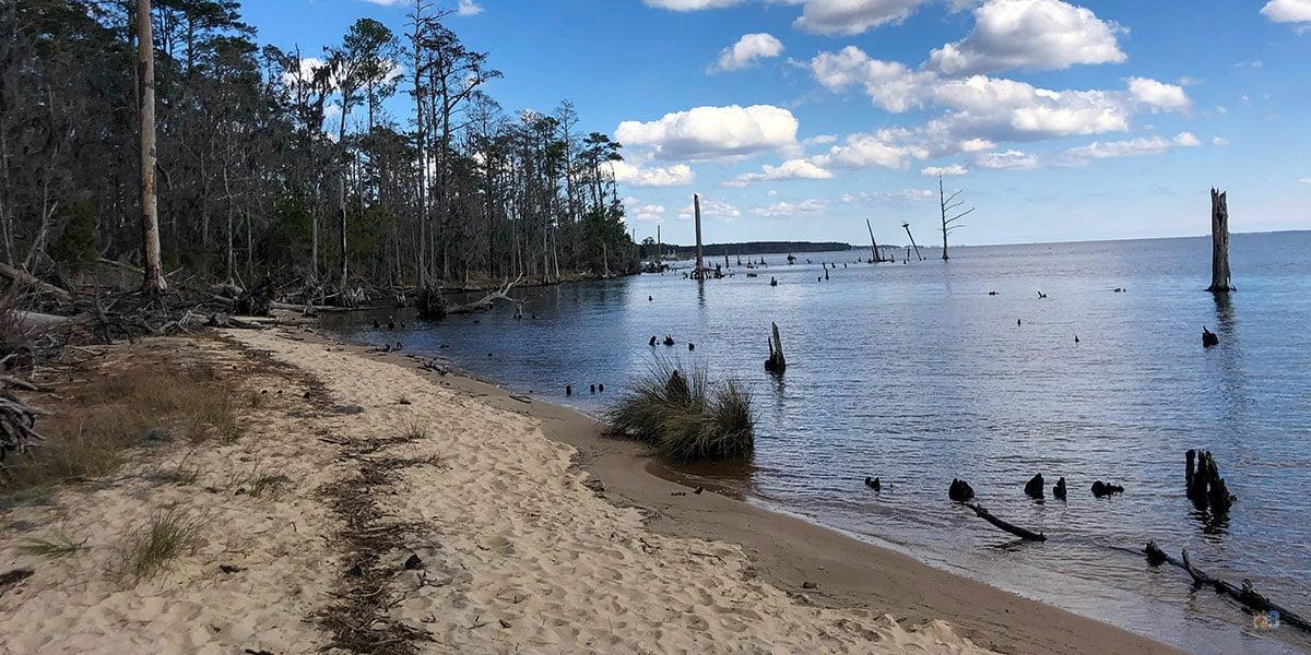 Goose Creek State Park NC