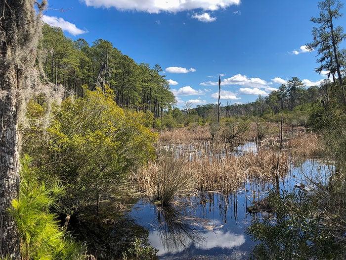 Goose Creek State Park North Carolina