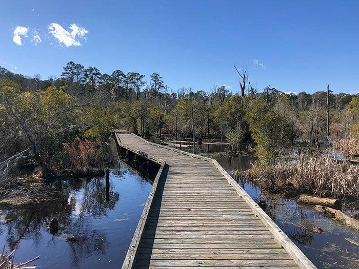 Goose Creek State Park Palmetto Boardwalk Trail