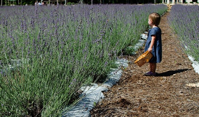 Kids at Lavender Farm in NC