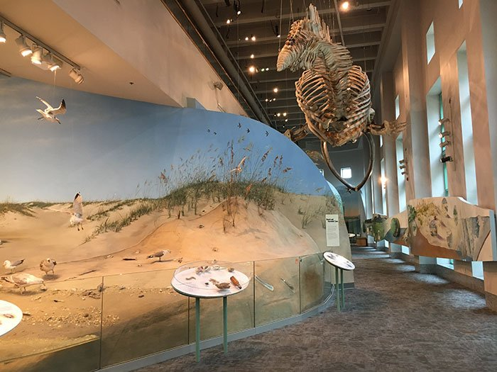 The NC Museum of Natural Sciences