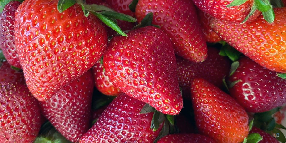 We're huge fans of strawberry picking in North Carolina and hope our guide helps you find some tasty farms to visit!