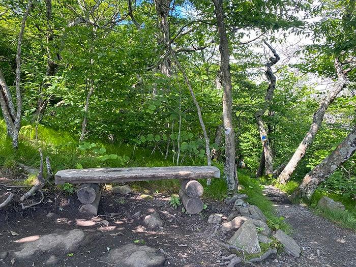 Elk Knob State Park NC Bench