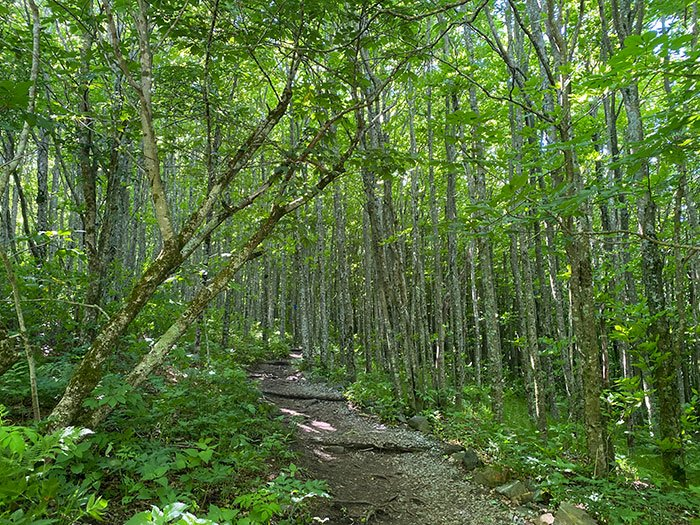 Hiking Elk Knob State Park NC
