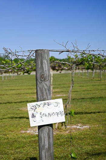 Vines at Huffman Vineyards things to do in Swansboro