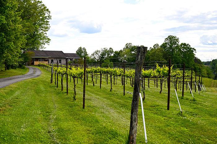 Carolina Heritage Vineyard