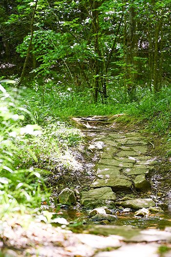 Hiking in Surry County