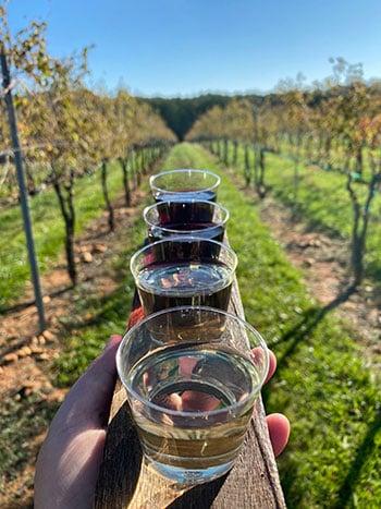 Kid Friendly North Carolina Wineries Divine Llama
