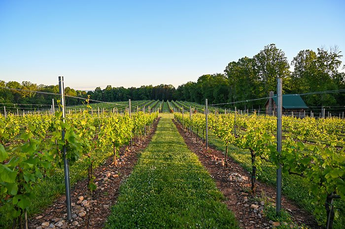 Surry County Wine Trail Haze Gray Vineyards Yadkin Valley