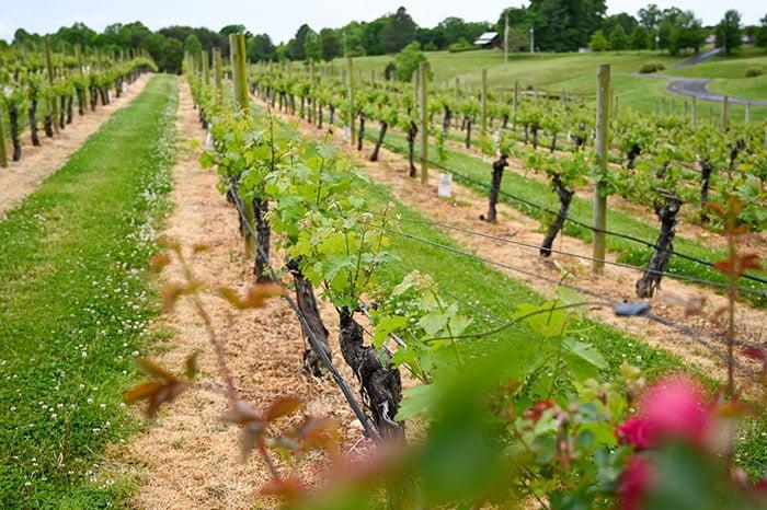 Surry County Wine Trail Stony Knoll Vineyards
