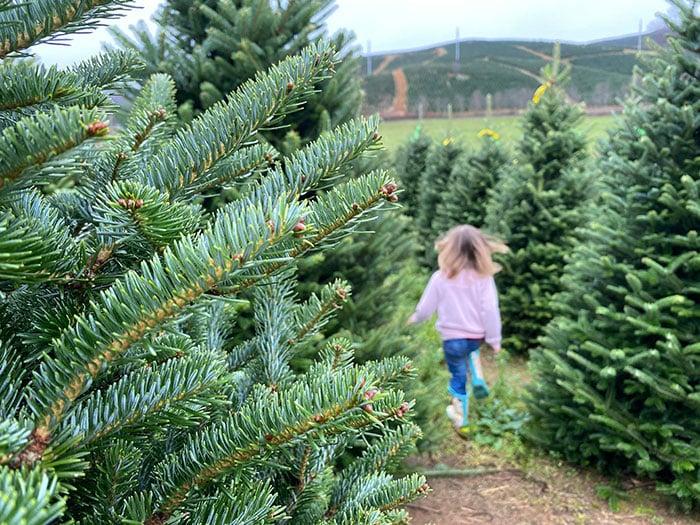 Things to Do in North Carolina Christmas Tree Farms