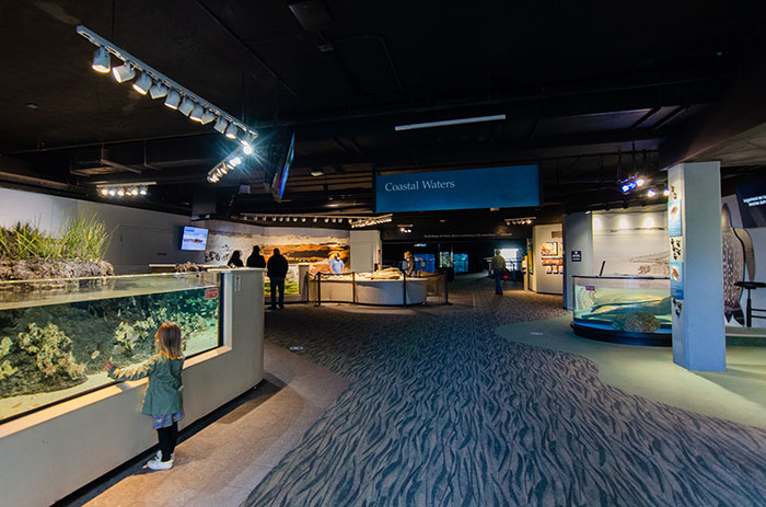 Things to Do in North Carolina NC Aquarium at Fort Fisher