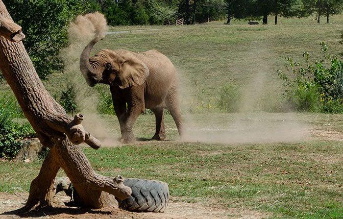 Things to Do in North Carolina NC Zoo Asheboro