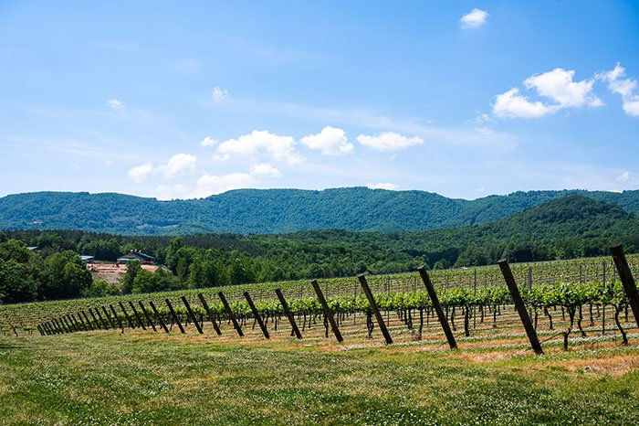 jones von drehle winery