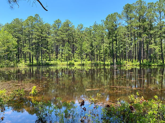 Day Trips from Durham NC Carvers Creek State Park