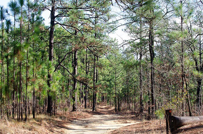Day Trips from Durham NC Weymouth Woods Sandhills Nature Preserve