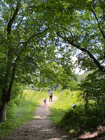 Day Trips from Raleigh NC Roanoke Rapids Roanoke Canal Trail