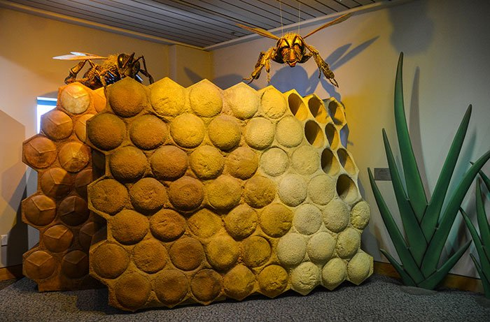 NC Museum of Natural Sciences Bug Fest in September
