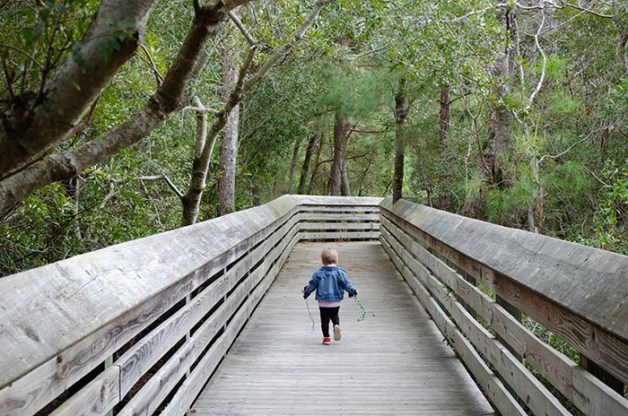 Things to Do in the Outer Banks Nags Head Woods