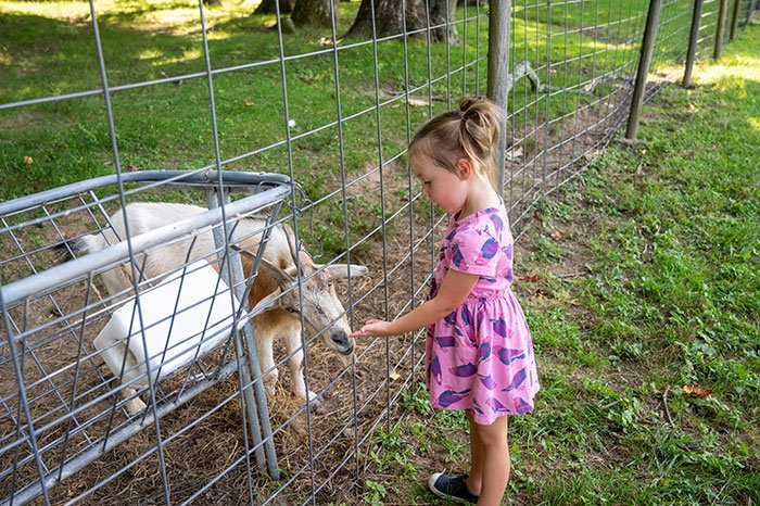 Apple Picking in Hendersonville more things to do