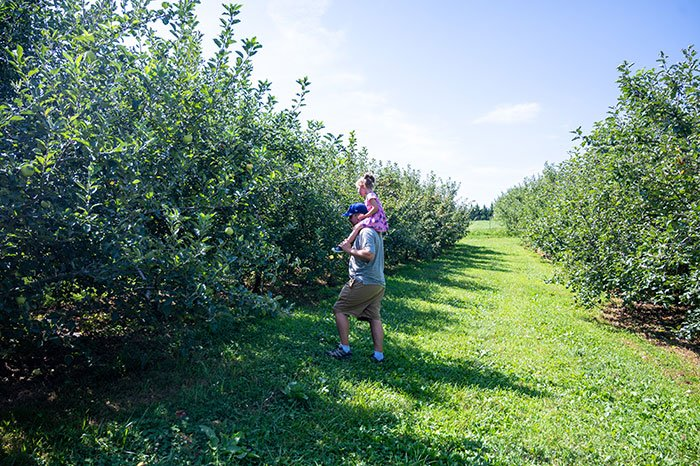 Apple Picking in Hendersonville orchards