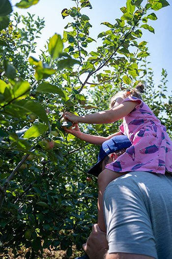 Apple Picking in North Carolina Sky Top Orchards Flat Rock NC