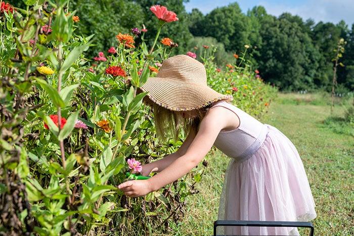 Firefly Farms Hillsborough NC