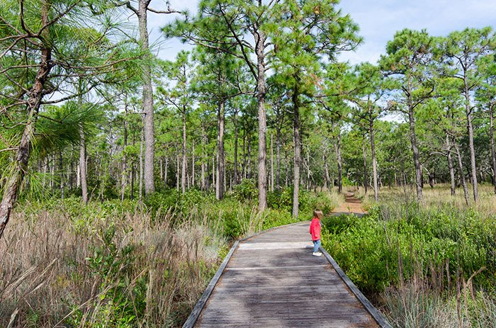 Hiking Trails in North Carolina Carolina Beach State Park Flytrap Trail