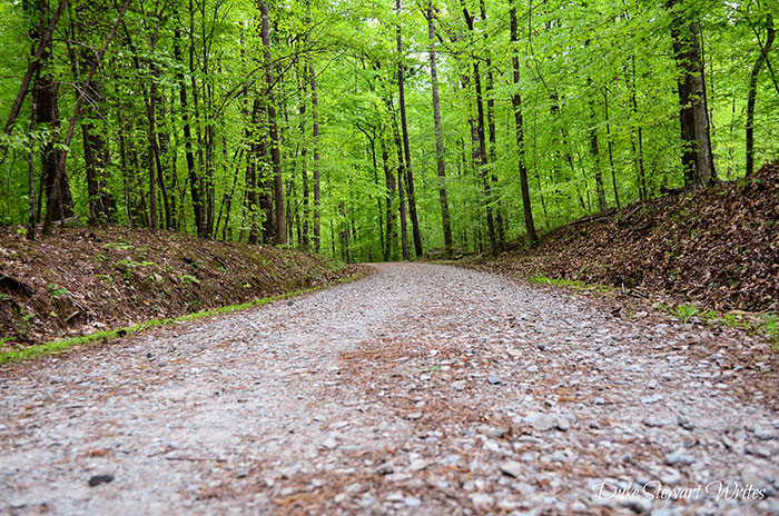 Hiking Trails in North Carolina Duke Forest Durham NC