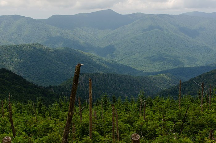 Hiking Trails in North Carolina Mount Mitchell State Park
